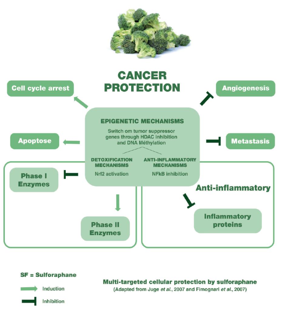 Brocosulf Protección celular de objetivos múltiples por sulforafano
