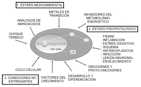 proteinas choque termicos