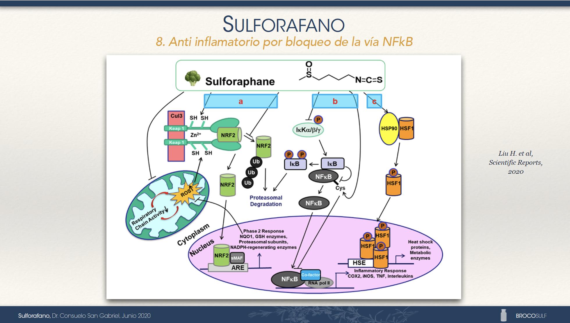 8. Anti inflamatorio por bloqueo de la vía NFkB