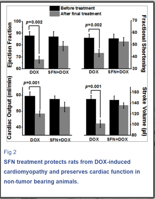 Sulforaphane potentiates anticancer effects of doxorubicin and attenuates its cardiotoxicity in a breast cancer model